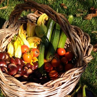 Come coltivare un orto Bio